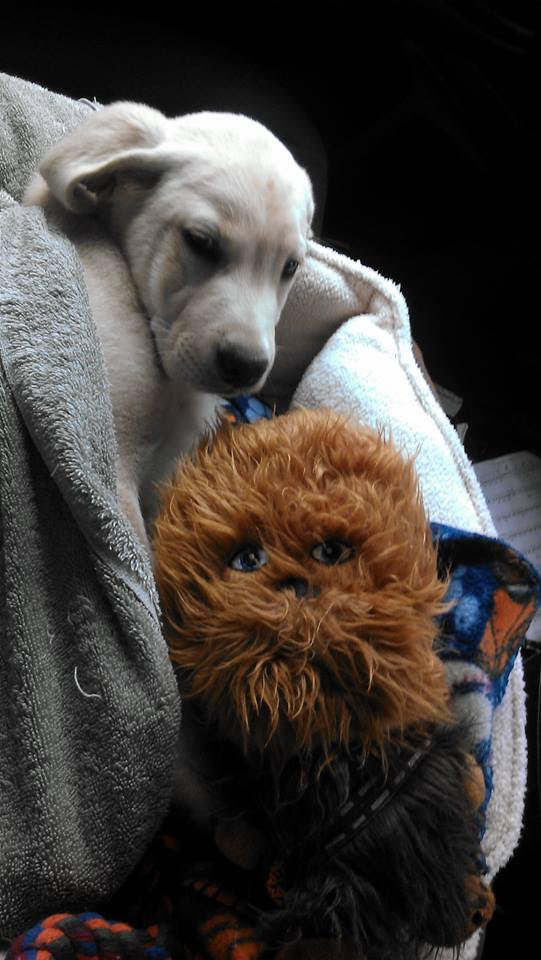 Baby Chewy with Chewy